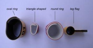 ringssh